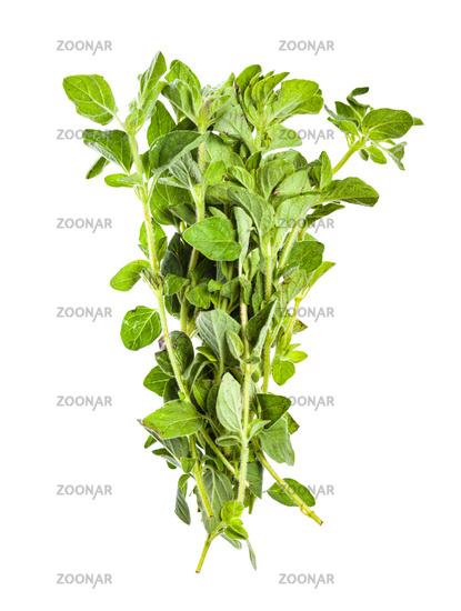 pile of fresh Oregano herb isolated on white