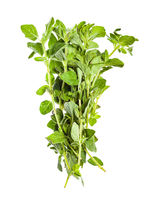 pile of fresh Oregano herb isolated on white