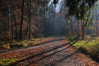 Lichtstimmung im Herbstwald