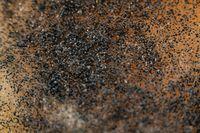 Black fungus on fruit macro photography shot