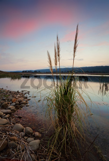 Sunset skies over Penrith Lakes with foreground reeds