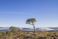 Fjelllandschaft im Trondelag
