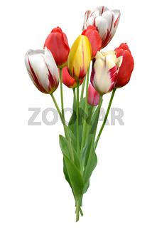 Blumen 1018.jpg