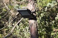 Lampe am Baum