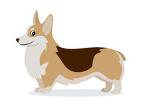 Cute corgi icon, small playful dog with short paws isolated, domestic animal, pet, vector illustration