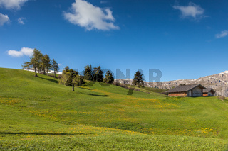 Alpine meadows on the Alpe di Siusi