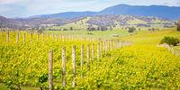Yarra Valley Vineyard
