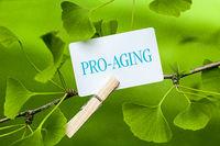"""Das Wort """"Pro-Aging"""" in einem Ginkgo Baum"""