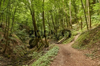 Forest walking route