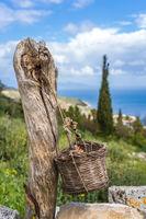 Wicker basket hanged on the old tree trunk