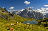 Bachalpsee und das Wetterhorn hinten, , Berner Oberland, Schweiz