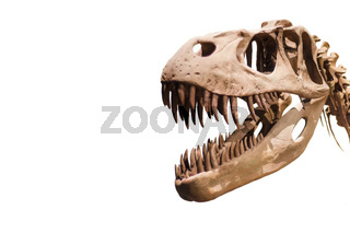 Tyrannosaurus Rex head on white isolated background with copyspace.