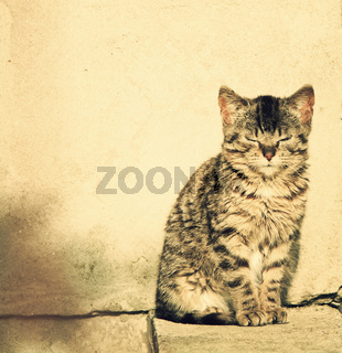 cute kitten enjoying sunlight