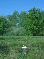 D--Schwalm-Nette Naturpark--Nettetal--Niederrhein.jpg