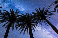Blue Milky way falling stars palm trees