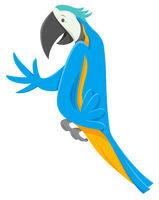 funny macaw bird cartoon animal character