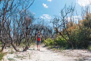 Bushwalker hiking on a sandy trail with scrub burnt by bushfire