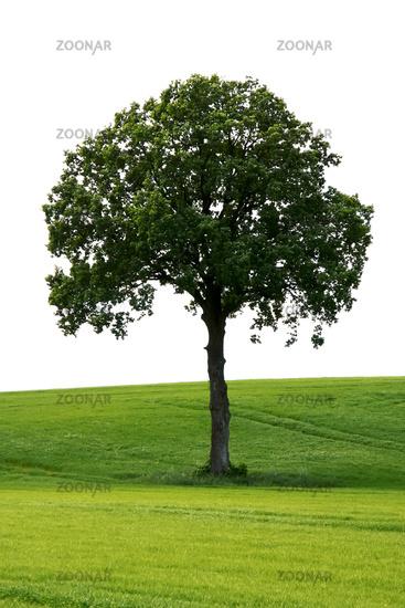 tree green meadow
