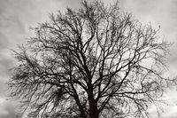tree against moody sky