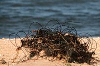 The fishing net is abandoned on the shore by poachers.