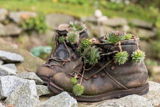 alte Wanderschuhe dekorativ bepflanzt - Upcycling