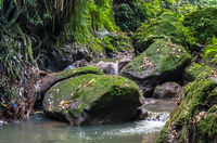 View on a mountain river in Sacred Monkey forest in Ubud