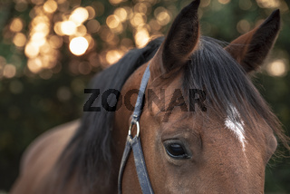 Brown horse with sad eyes