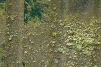 Sheet metal with traces of green Moss
