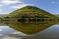 Weinberg spiegelt sich im Fluss Douro bei Pinhao, Douro Tal, Portugal