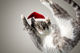 Flying or jumping funny tabby santa cat in red hat isolated on white and gray background. Copy space. Greeting card template. Holiday lazy kitten