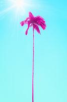 pink palm tree