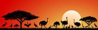Birds of the savannah