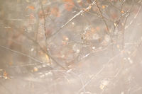 Autumn forest abstract background