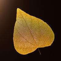 Macro photo of yellow leaf on a black background with copy space. Beautiful natural layout. Flat lay