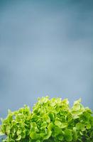 Hydrangea flower against a blue sky