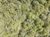 Forest Tree Tops Aerial