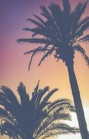 Retro Vibrant Hawaii Palm Trees