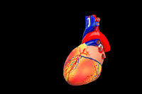 Colorful human heart model on black background