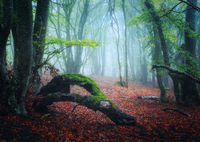 Scary autumn forest with trail in fog. Fall colors. Foggy trees
