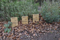Seelenfrieden... Manheim *alter Friedhof*, Umbettung der Verstorbenen in Vorbereitung auf die Erweiterung des Braunkohle-Tagebaus Hambach