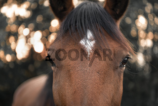 Horse looking straight at the camera