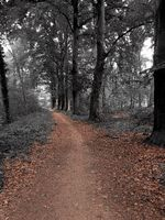 path through a dark forest, mystery landscape beautiful nature