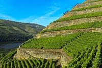 Terrassenförmige Weinberge mit Trockenmauern aus Stein an den steilen Abhängen des Höllen-Tals