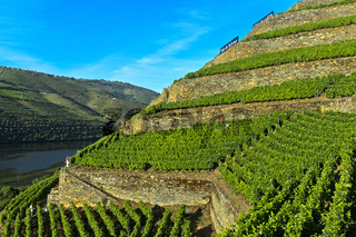 Terrassenförmige Weinberge mit Trockenmauern aus Stein,  Pinhao, Douro Tal, Portugal