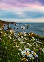 California Sunset with Wildflowers