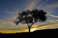 Sonnenaufgang mit Baum auf der Schwäbischen Alb