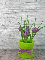 Hintergrund Frühling lila Tulpen auf Holz