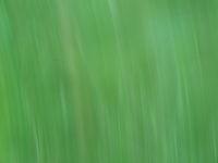 Grünfarbiger Hintergrund