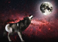 Digital 3D Illustration of a Wolf, Elements by NASA