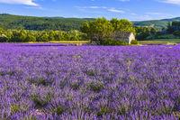 Landschaftspanorama mit großem Lavendelfeld und Steinhütte